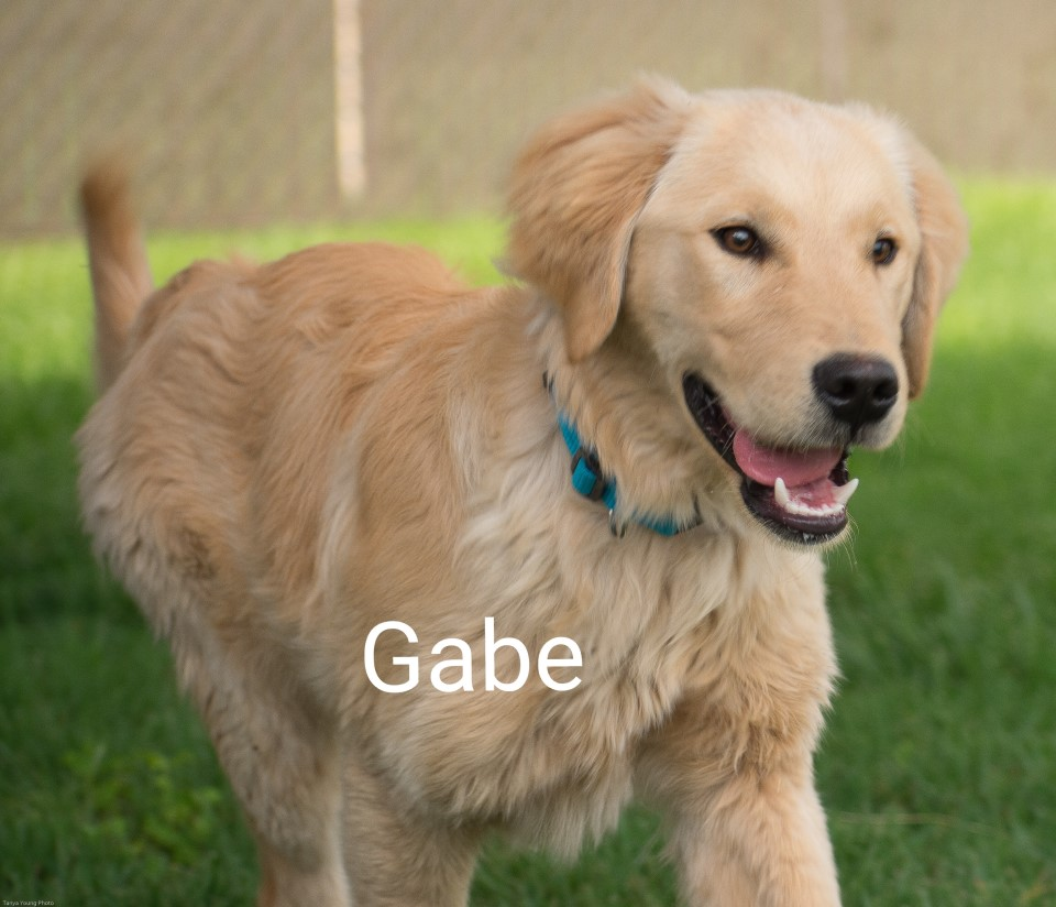 Gabe trained puppy