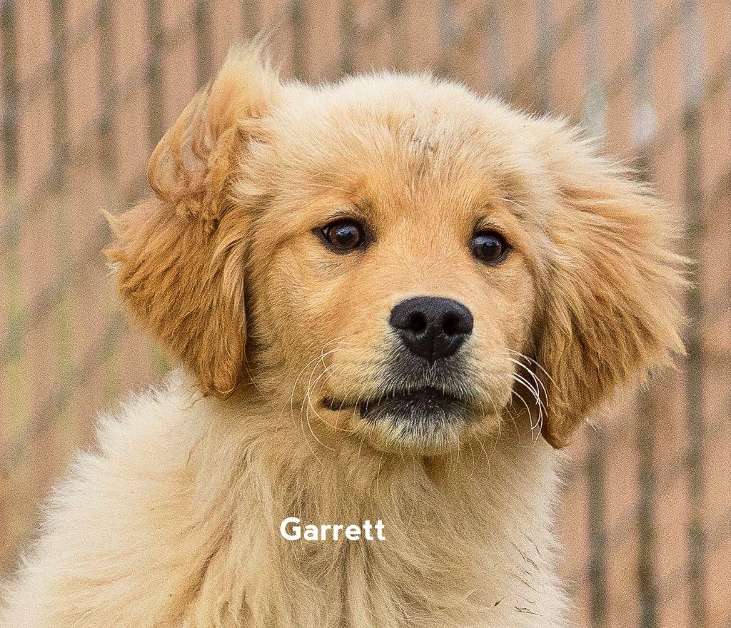 Garrett trained puppy