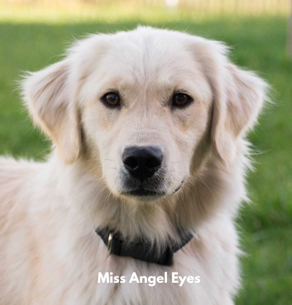 Miss Angel Eyes trained puppy